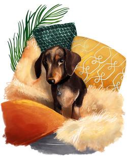 Dog Portrait Daschund