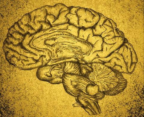 Brain%25252520Sketch_edited_edited_edited_edited.jpg