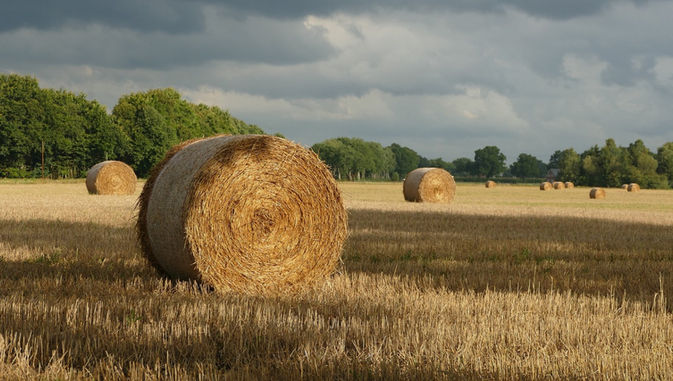 Bedforshire Countryside