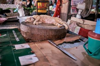 Cats market, nap