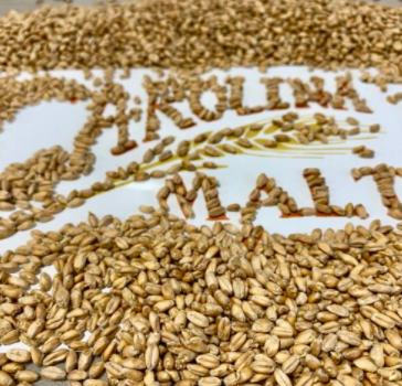 Carolina Malted Wheat