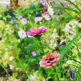 pollinatorgarden.jpg