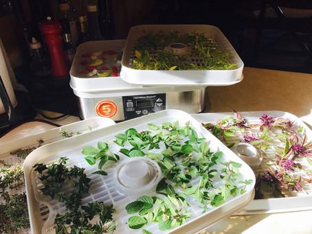 DryingFresh Herbs Using a Dehydrator