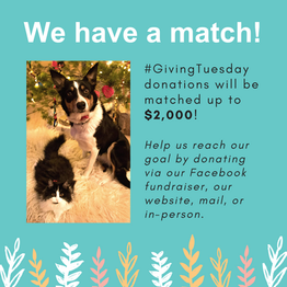 Giving Tuesday Social Post 3.png