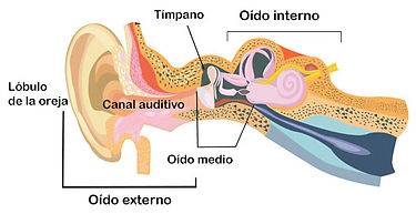 ear-diagram-sp.jpg