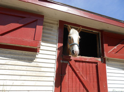 horse-141915