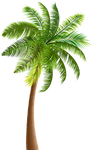 palm_tree_PNG93278.png