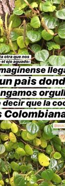 Coca, NO cocaína