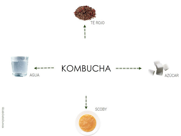 MAPA INGREDIENTES KOMBUCHA JPEG.jpg