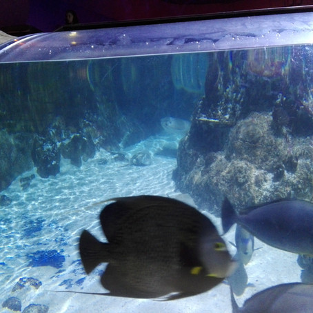 Os alunos da escola de Palmaz visitam o Sea Life (2ª Ed. - junho de 2019)