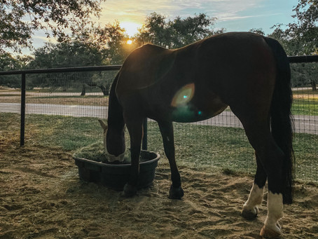 """My Pros & """"Cons"""" • Horses At Home"""