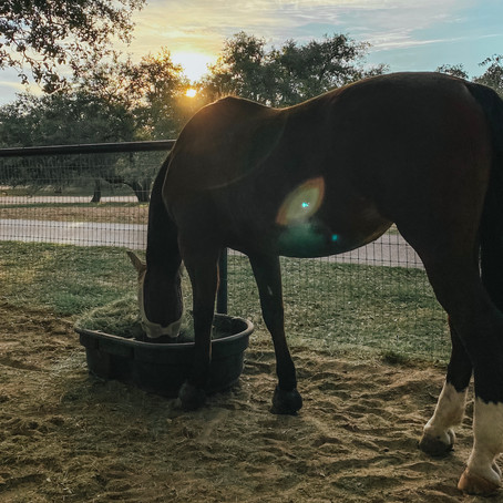 "My Pros & ""Cons"" • Horses At Home"