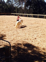 horse arena construction