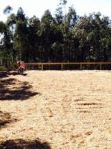horse arena construction dressage
