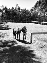 horse arena construction adelaide .JPG