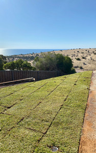 Instant Lawn Adelaide