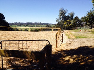 horse arena construction dressage