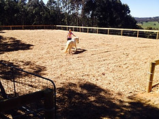 horse arena construction and landscaping