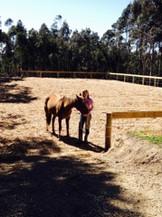 horse arena construction adelaide