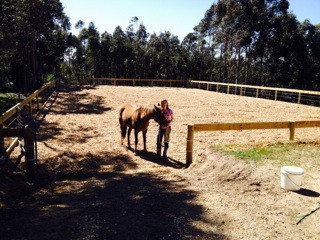 horse arena construction adelaide