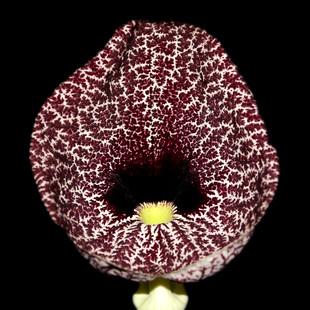 amazing flower 1.jpg