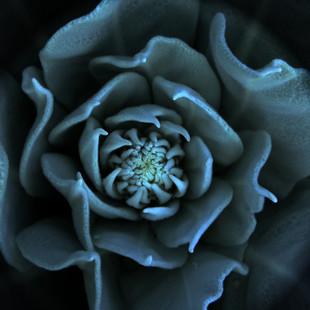 dark herat rhs april 2011 2.jpg