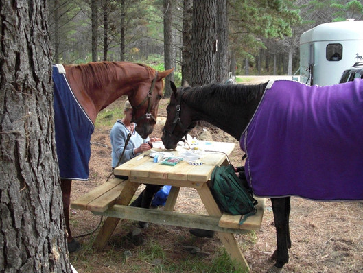 Horse riding holiday|NZ Riding|Horse Camp| Equitours| Horse riding NZ| Horse back Holiday|Horse b&B|Bed and Breakfast|Glamping