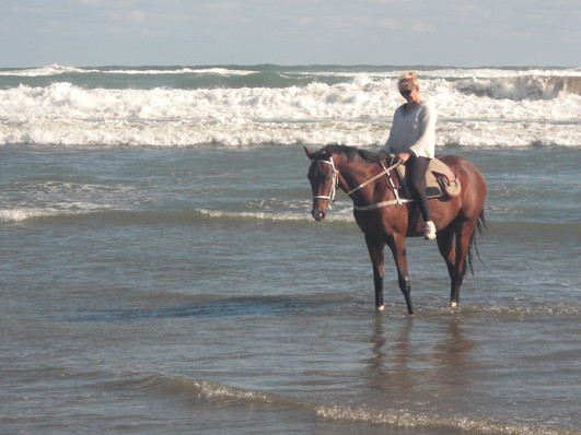 Imperial Riding Holiday/ Visit NZ on Horseback /  Riding holiday /  Working equitation NZ / Forestry Riding / Horse riding NZ / Beach Riding /