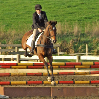 Harry In action Show jumping