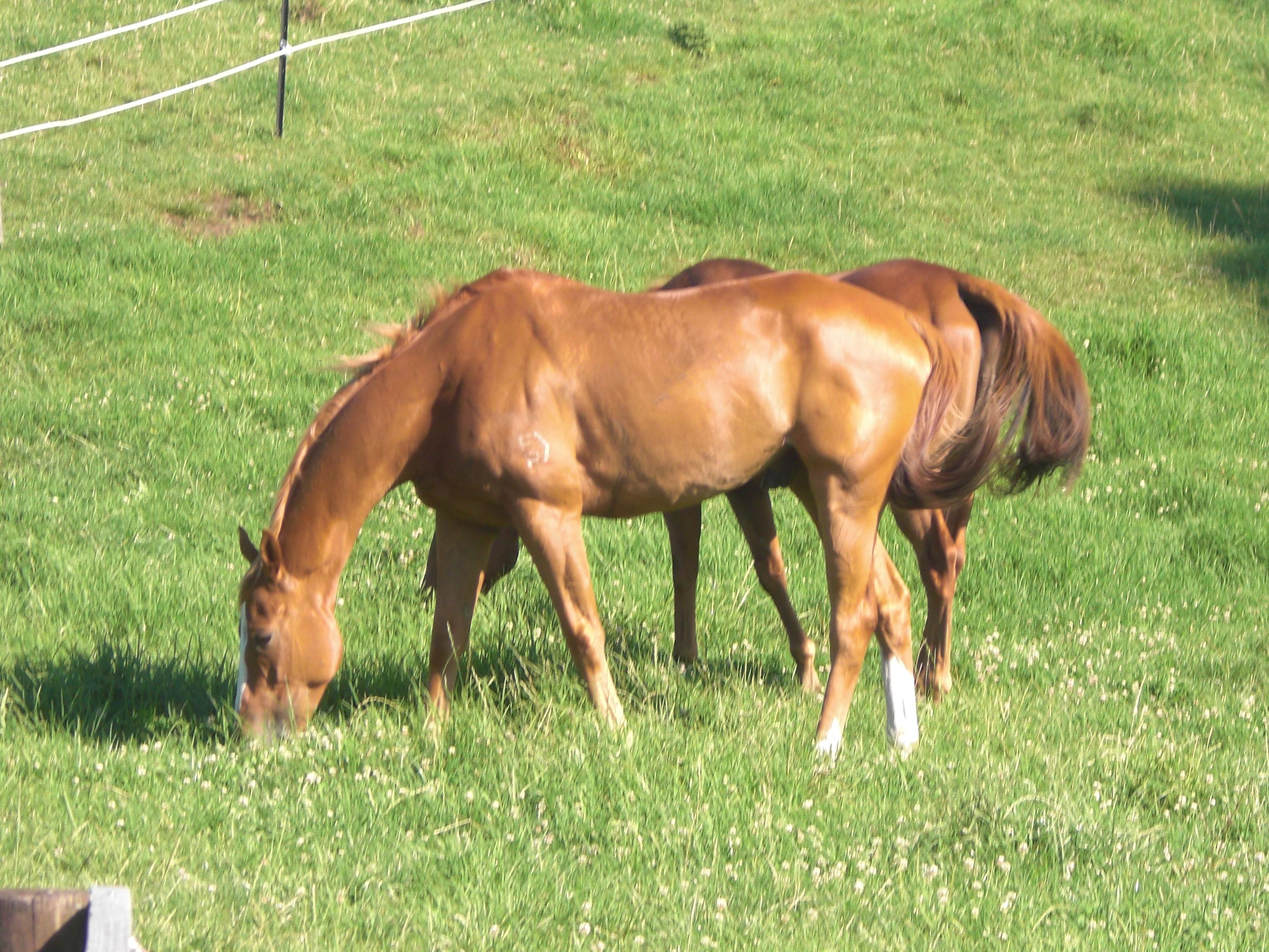 Happy horses enjoying the sunshine