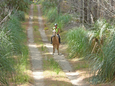 Stunning Forestry riding