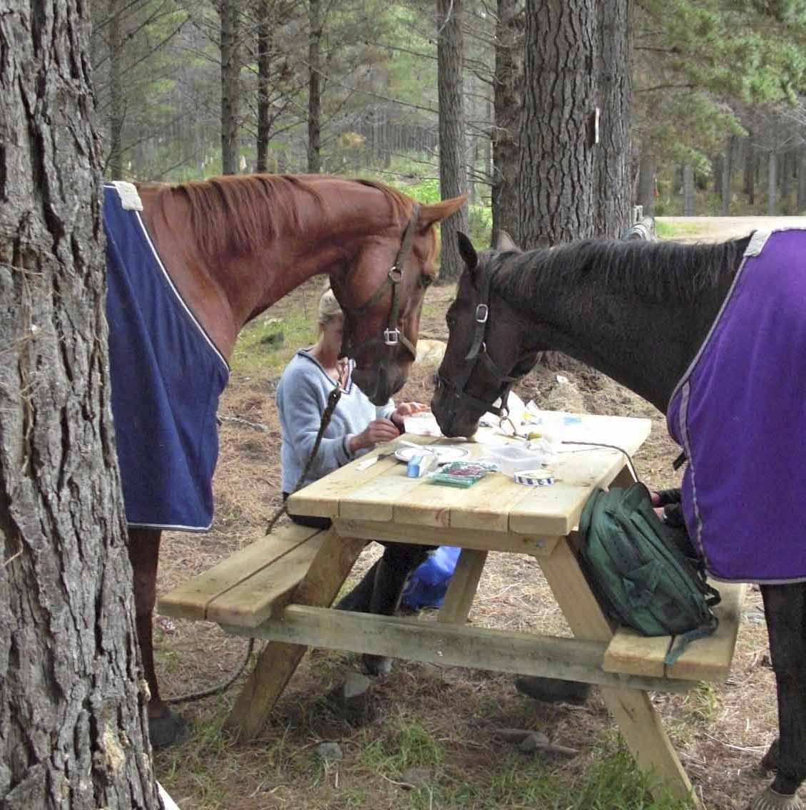 Now thats a horse Friendly picnic