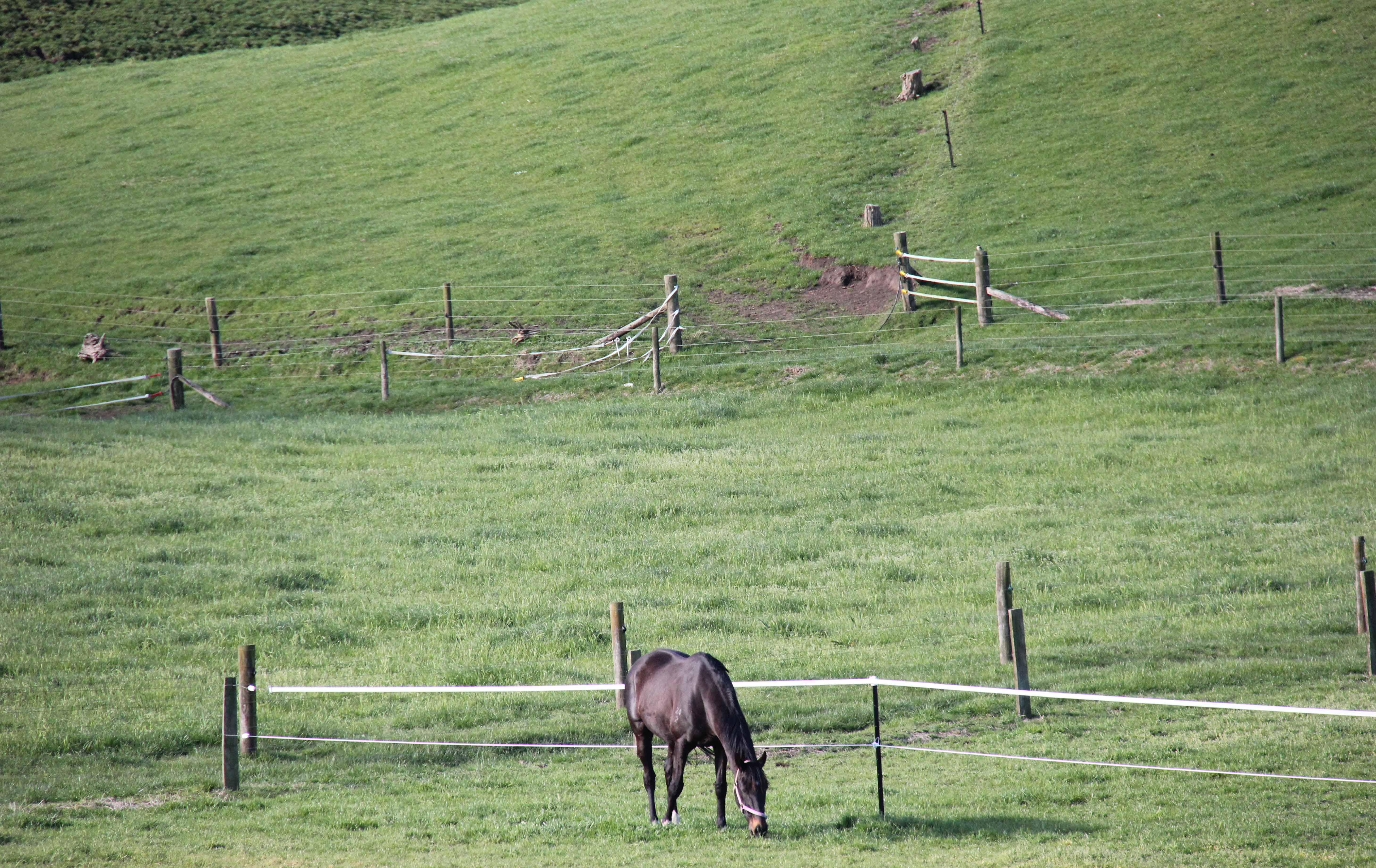 Safe Equi-fenced pasture.
