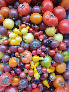 Tomatoes 2020.jpg