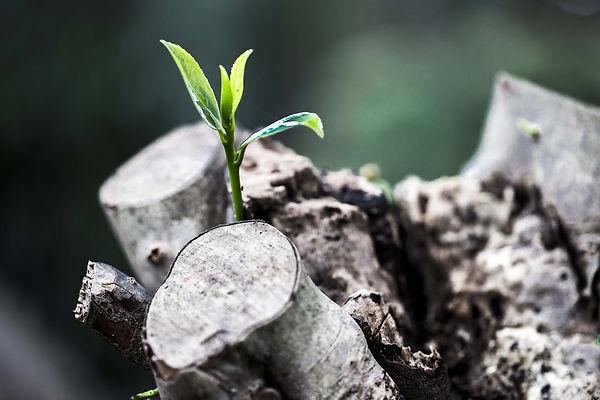 צמיחה מחדש, התחלה של חיים חדשים
