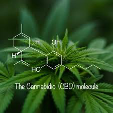 How does CBD work its magic in the body?