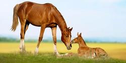 KsCER Specialized Horse Breeding