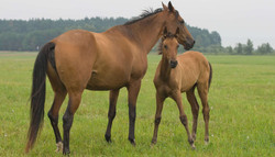 KsCER Foaling Services