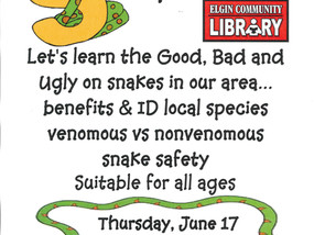 Slither on in to learn all about snakes