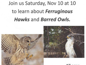 Hawks and Owls, oh my!!!
