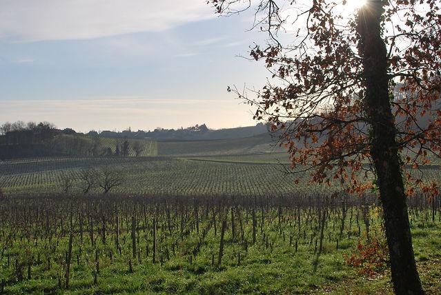 Vignoble Côtes de Bourg