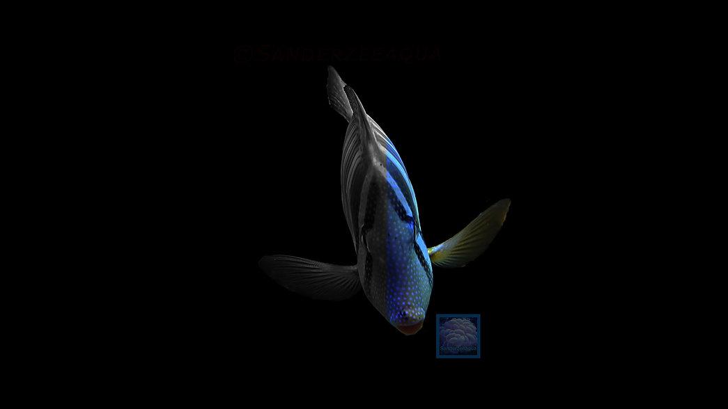 hoofdafbeelding-zwartwit-vis-1a.jpg