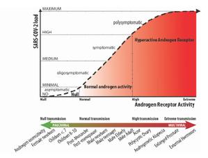 A más cantidad de androgenos mayor hipotética sensibilidad