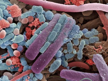 Microbiota - Bacterias intestinales y alopecia areata