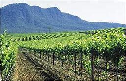 vineyard promo.jpg