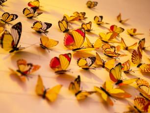 Coming soon: De volatiele vlucht van de vlinder