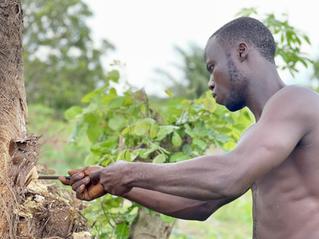 Tambour & AgroSfer : rendre la filière plus durable