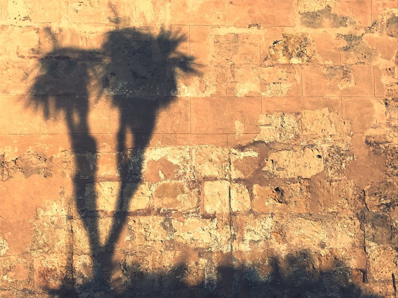 Palma wall