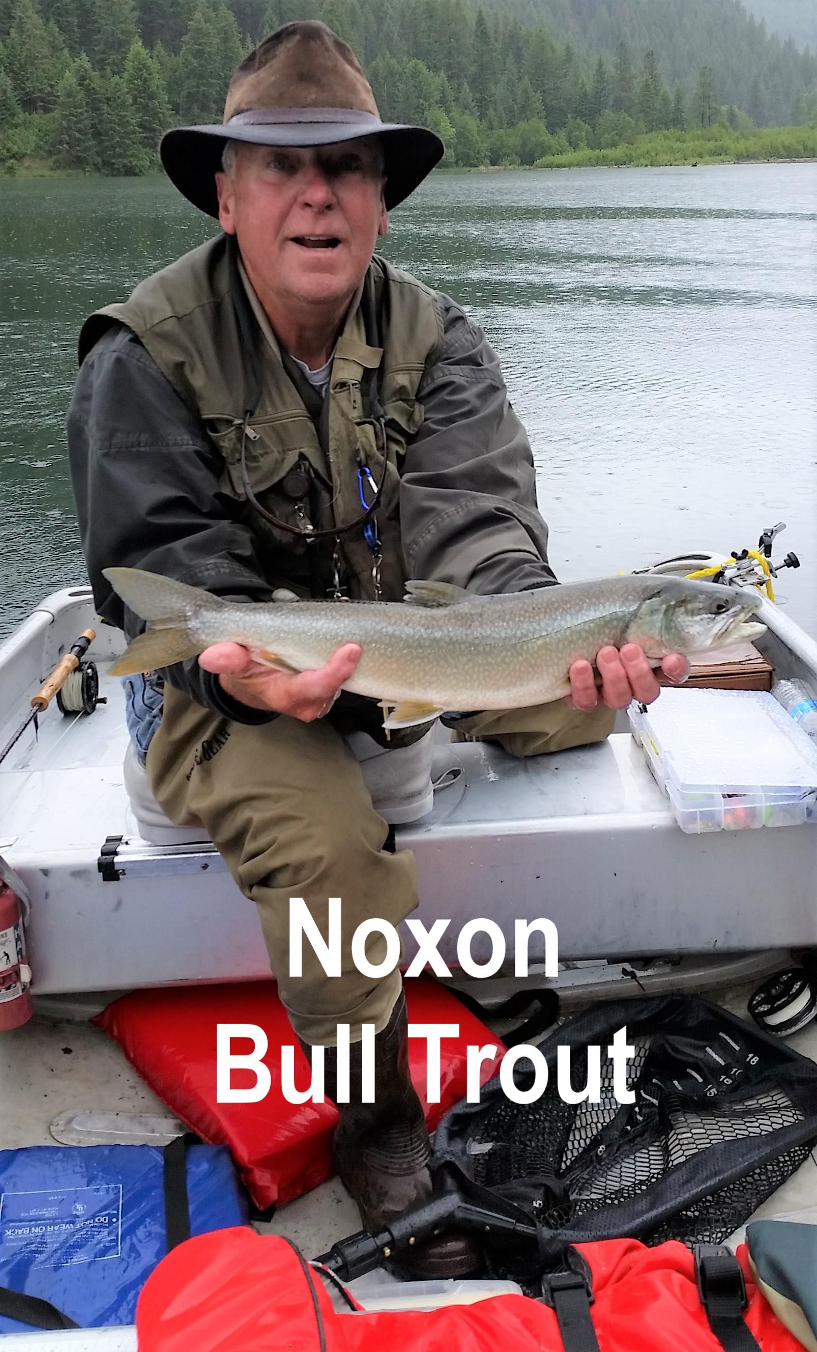 Noxon Bull