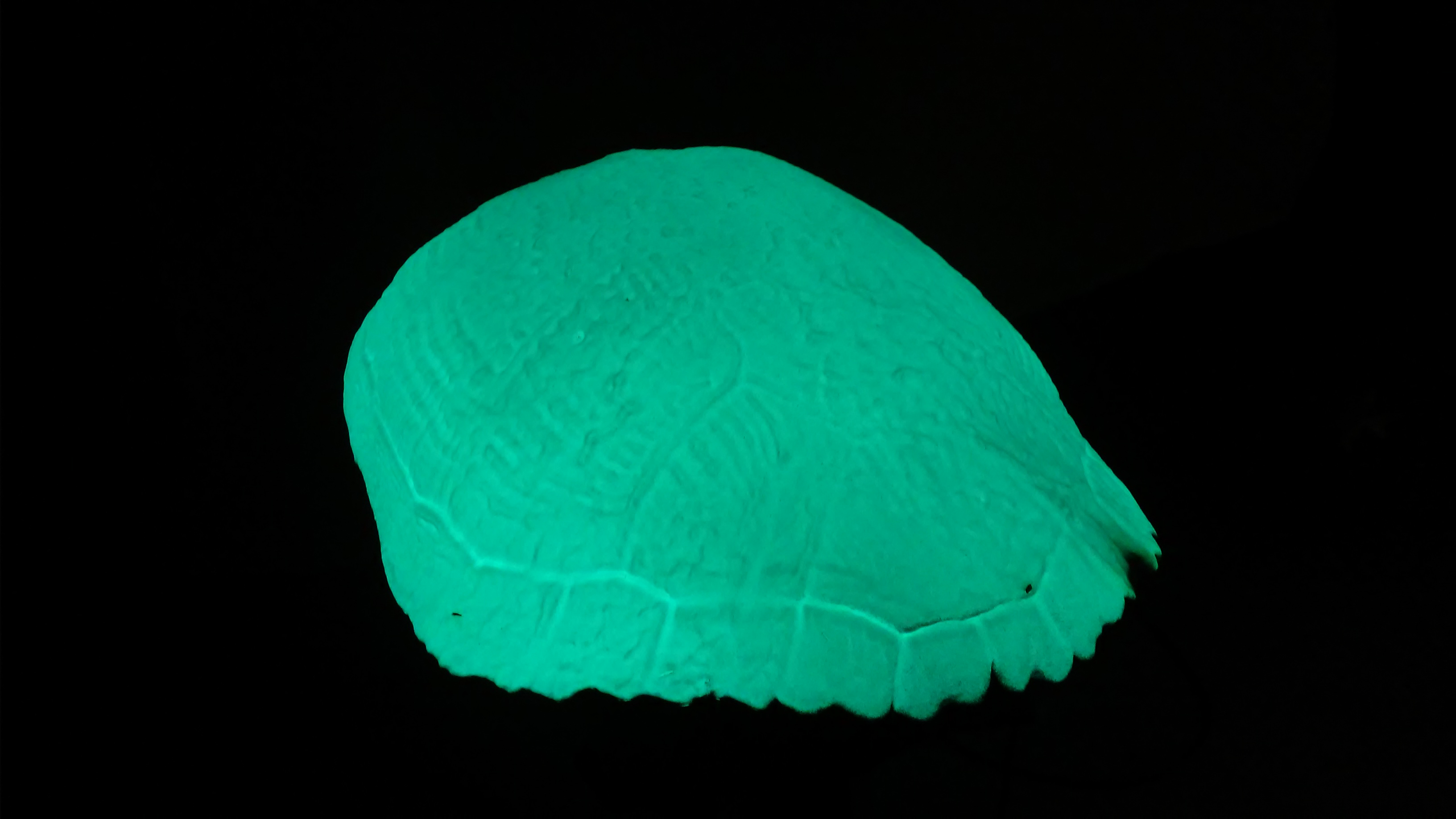 LumiLor Turtle Shell 2